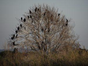 villepey-un-refuge-pour-les-oiseaux-debut-008