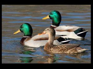 villepey-un-refuge-pour-les-oiseaux-debut-015