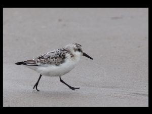 villepey-un-refuge-pour-les-oiseaux-debut-018