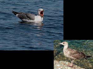 villepey-un-refuge-pour-les-oiseaux-fin-001