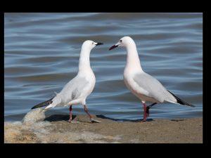 villepey-un-refuge-pour-les-oiseaux-fin-002