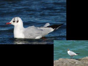 villepey-un-refuge-pour-les-oiseaux-fin-003