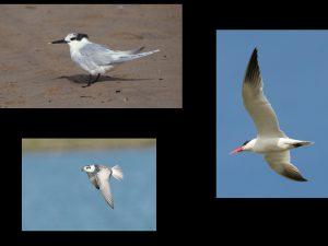 villepey-un-refuge-pour-les-oiseaux-fin-004