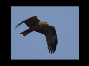 villepey-un-refuge-pour-les-oiseaux-fin-005