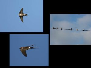 villepey-un-refuge-pour-les-oiseaux-fin-009