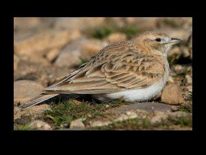 villepey-un-refuge-pour-les-oiseaux-fin-010