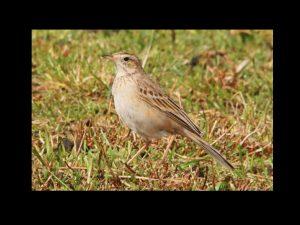 villepey-un-refuge-pour-les-oiseaux-fin-012