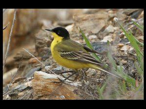 villepey-un-refuge-pour-les-oiseaux-fin-014
