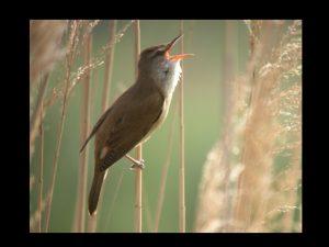 villepey-un-refuge-pour-les-oiseaux-fin-015