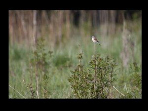 villepey-un-refuge-pour-les-oiseaux-fin-016