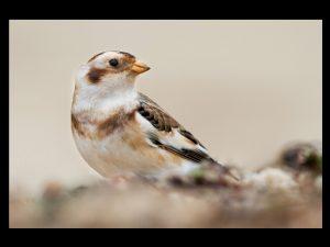 villepey-un-refuge-pour-les-oiseaux-fin-018
